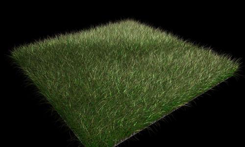 Grass Blade Close Up Grass Blade Close Up R Nongzico